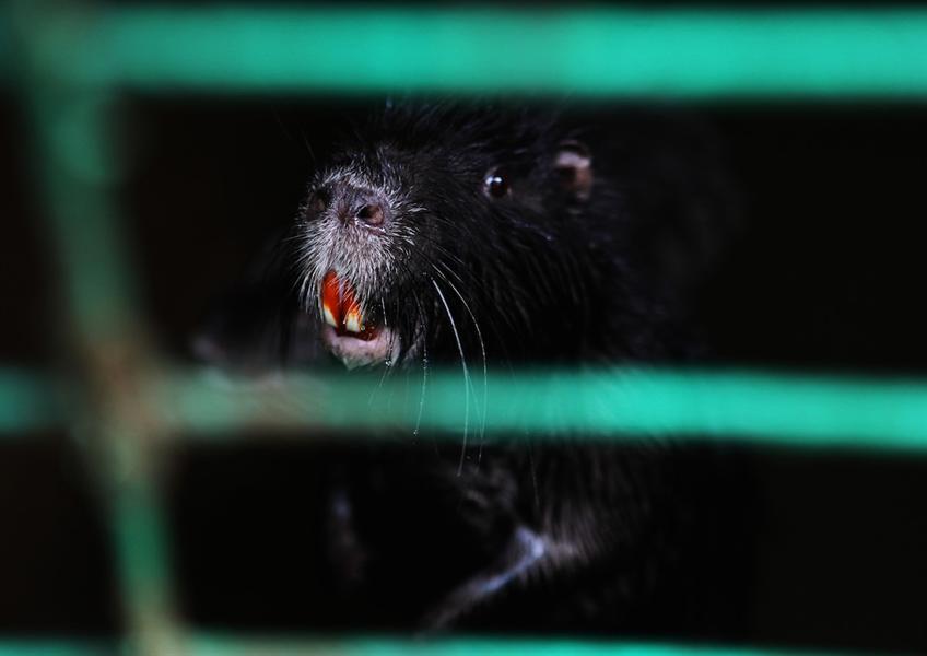 被囚禁的动物