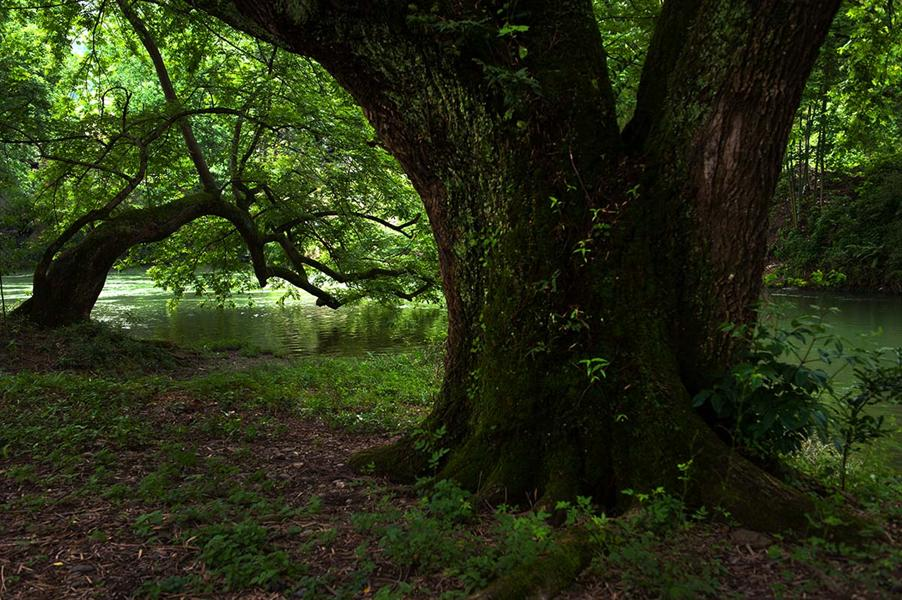 壁纸 风景 森林 桌面 902_600