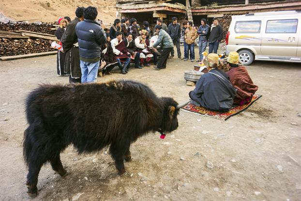 藏族动物名称及图片